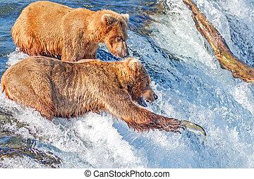 brun, national, saumon, alaska, ruisseaux, parc, sauter, chutes, ours, prise, katmai, essayer