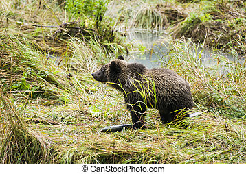 brun, -, ours, déjeuner, bébé, apprécier