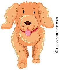 brun, pelucheux, fourrure, chien