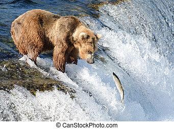 brun, saumon, alaska, ours, grand, attente