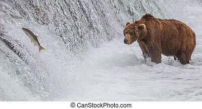 brun, saumon, haut, ours, chutes, regarder, sauter