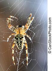brun, toile araignée