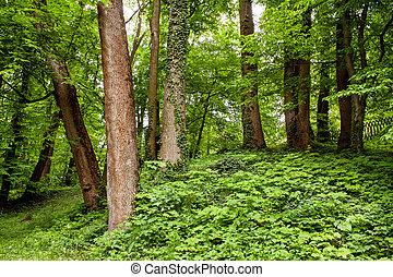 buisson, parkf, vieux, arbres