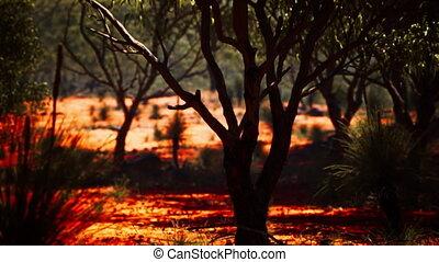 buisson, sable, arbres, rouges