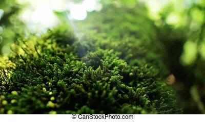 buisson, vert, au-dessus, mouvement
