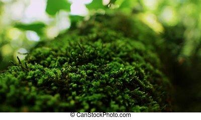 buisson, vert, passé, mouvement