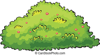 buisson, vert