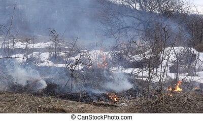 buissons, brûlé, bord route