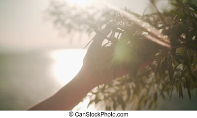 buissons, lent, femme, glissement, feuillage, motion., surface, main, clair, toucher, vert, femme, sun., coucher soleil