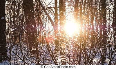 buissons, lent, flocons neige, arbres, mouvement, coucher soleil, forêt, automne, lentement