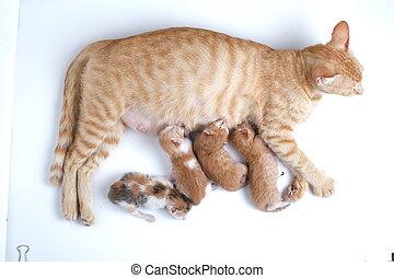 buvant lait, bébé, poitrine, chatons, leur, nouveau né, maman