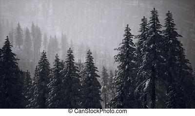 cône, flanc montagne, neige, hiver, couvert, arbres