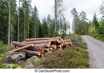 côté route, forêt, bois construction, conifère, pile