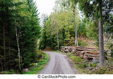 côté route, vert, saison, forêt, automne, tas bois