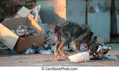 c, alimentation, déchets, sdf, chien