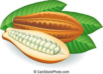 cacao, beans., illustration., vecteur