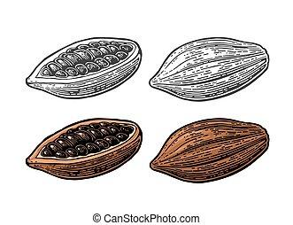 cacao, beans., vecteur, vendange, gravé, illustration, fruits