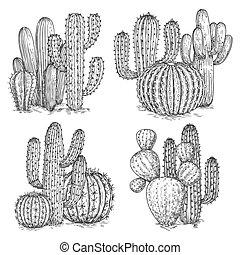 cactus, illustration., désert, isolé, main, vecteur, fond, sketched, fleurs blanches, compositions