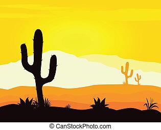cactus, mexique, désert, coucher soleil
