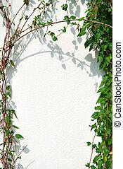 cadre mur, blanc, lierre