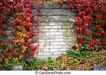 cadre mur, lierre