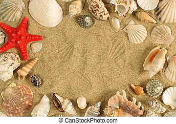 cadre, seashell
