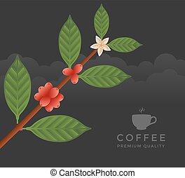 caféier, branche