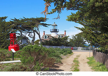 californie, bosquet, pinos, point phare, pacifique