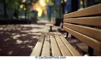 calme, arbres, bancs, ville parc