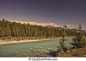 canada, banff, -, parc national, arc, alberta, rivière