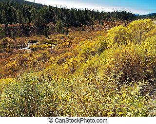 canada, désert, nord, t, automne, yukon