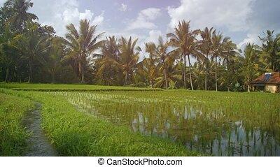canal, a côté, irrigation, son, indonésie, champ, bali, riz