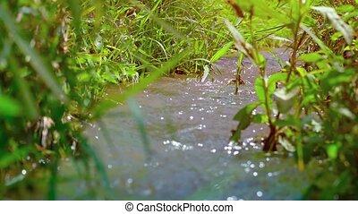 canal, son, irrigation, champ riz