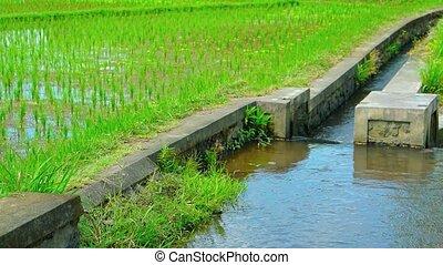 canal, son, plantation, système, irrigation, riz, construit