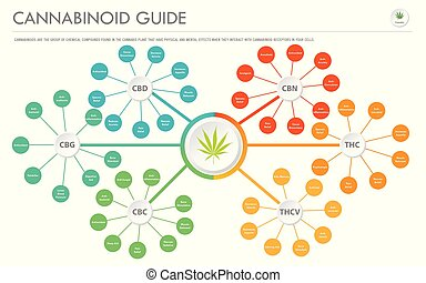 cannabinoid, horizontal, business, infographic, guide