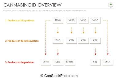 cannabinoid, présentation, business, infographic, horizontal