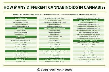 cannabinoids, cannabis, infographic, différent, horizontal, beaucoup, comment