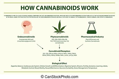 cannabinoids, infographic, travail, horizontal, comment