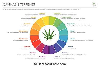 cannabis, business, terpenes, infographic, horizontal