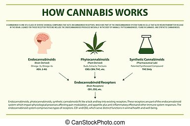 cannabis, infographic, horizontal, comment, travaux