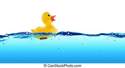 caoutchouc, eau, flotteur, canard