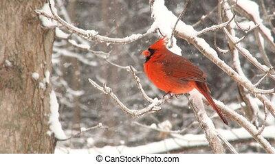 cardinal nord, hiver, orage