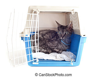 caresser transporteur, chat