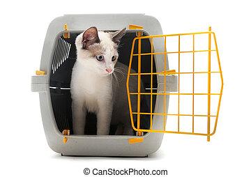 caresser transporteur, chaton