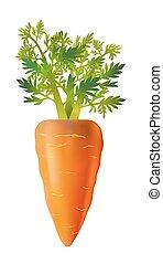 carotte, illustration, arrière-plan., vecteur, vegetable., blanc