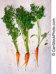 carotte, organique, frais