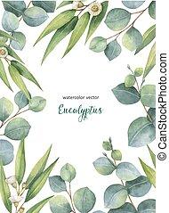 carte, eucalyptus, branches, arrière-plan., vecteur, aquarelle, floral, feuilles, isolé, blanc, vert