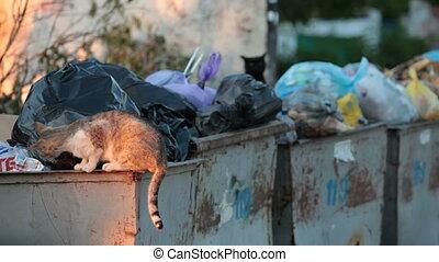 casiers, sdf, affamé, déchets, chat