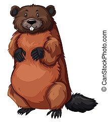 castor, fourrure, brun