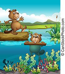 castors, rivière, deux, profond